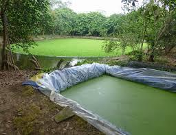 agriculture-aquaculture-1.jpg