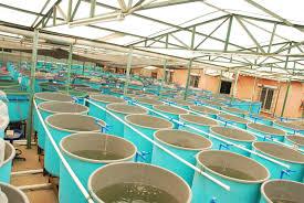 agriculture - aquaculture 3